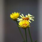 3 Flowers by tc5953