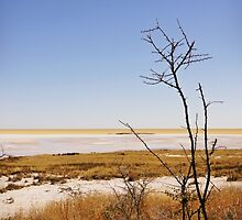 Etosha National Park 2 by Natalie Broome
