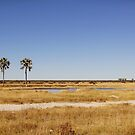 Etosha National Park by Natalie Broome