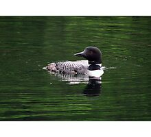 Loon- Northern Ontario Photographic Print