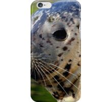 Young Harbor Seal iPhone Case/Skin