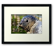 Young Harbor Seal Framed Print