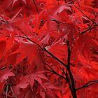 Autumn Leaves by cherryannette