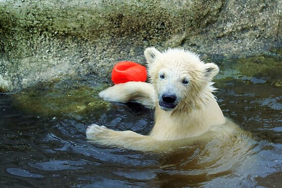 Playing the Ball - Baby Polar Bear by Jo Nijenhuis