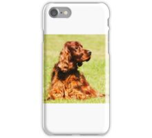 Red Setter iPhone Case/Skin