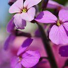 Spring Bloom by Natalie Broome