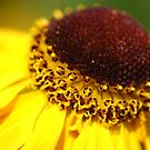 Summer Flower 2 by Natalie Broome