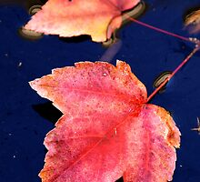 Tinge Of Fall by lisamgerken