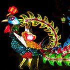 Peacock Lantern by Wanda Dumas