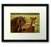 Exmoor Pony with Foal Framed Print