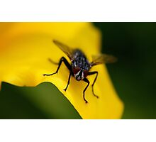 Mr Fly Photographic Print