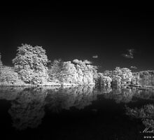 Autumnal Reflections by Martin Finlayson