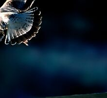 Fly Away by Jay Gross