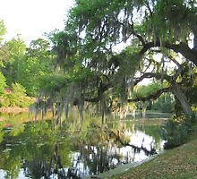 Water Reflections at Middleton Place by Darla Brock