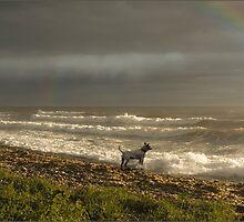 Under the Rainbow by Sandy09