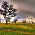 Along A Country Road - Central West NSW Australia - The HDR Experience by Philip Johnson
