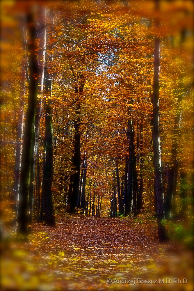 ♥ ♥ ♥ ♥ series. Autumn Leaves (Les Feuilles Mortes).Memories of those happy times when we were all together. Brown Sugar Storybook.  Favorites: 13 Views: 1742 . Thanks! by © Andrzej Goszcz,M.D. Ph.D