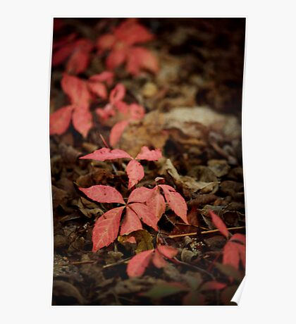 Fearie Trail - Red Ivy Poster