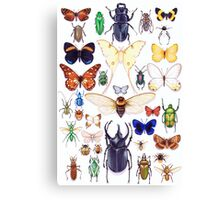 Insect collection Canvas Print
