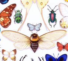 Insect collection Sticker