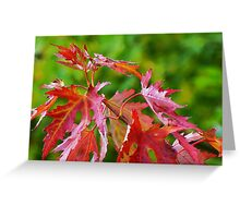 Touch of Fire Greeting Card