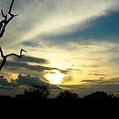 Kruger Sunset by Natalie Broome