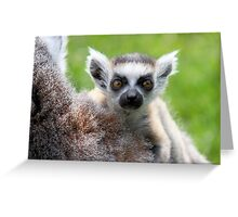 Safe on Mothers Back - Young Ring-tailed Lemur Greeting Card