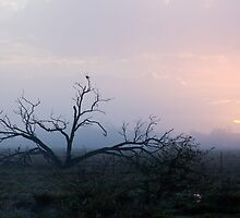 Moody Dawn - Outback NSW by Dilshara Hill