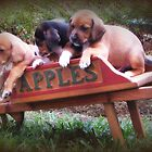 Apple (Puppy) Cart by DottieDees