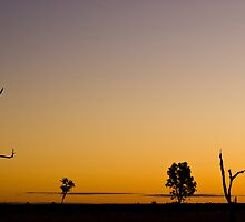 Outback Sky by Dilshara Hill