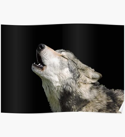 The Jubilation Of The Wolves Poster