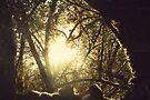 Through the tree by Joshua Greiner