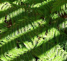 shaded fern by feelingpaulie