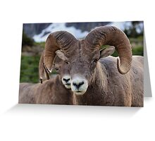 Rams are close! Greeting Card