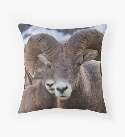Rams are close! Throw Pillow