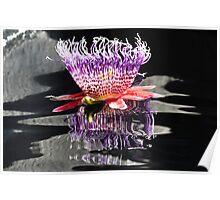 United States Botanical Gardens - Passion Flower Poster