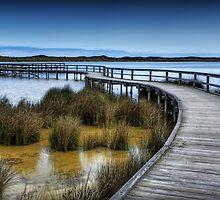 Lake Clifton Boardwalk. by Balian