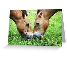 Nose to Nose - Przewalski's horse Greeting Card