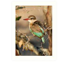 Brown Hooded Kingfisher Art Print