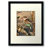Brown Hooded Kingfisher Framed Print