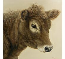 Gentle Calf Photographic Print