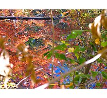 Coloured Autumn Shafts Photographic Print
