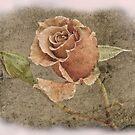 Textured Rose by julie anne  grattan