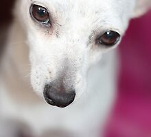 Chihuahua by earthsmate