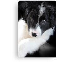 Cuddly Puppy Canvas Print