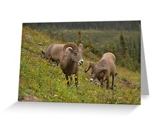 Glacier Rams Greeting Card