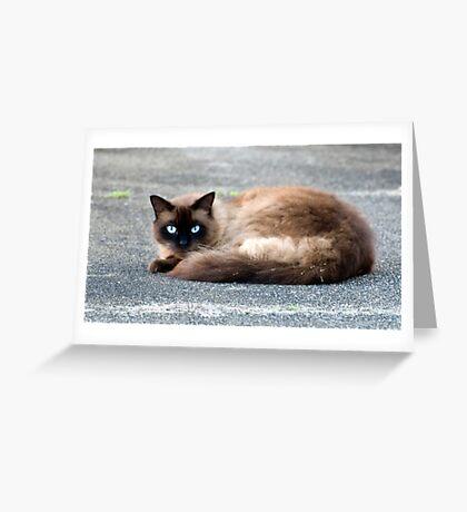 Puss Greeting Card