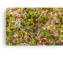 Macro of clover sprouts Canvas Print