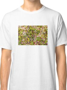 Macro of clover sprouts Classic T-Shirt