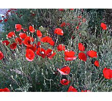 Greece - Flanders Poppies Photographic Print